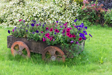 Decorative Vintage Model Old Wooden Shopping Cart Full Of Flowers. Landscaping