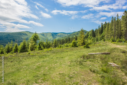 Foto op Canvas Pistache green summer forest mountain landscape somewhere on country side