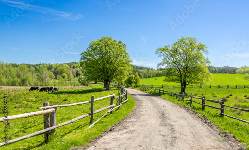 Spoed Foto op Canvas Lime groen Countryside landscape with rural road and blue sky
