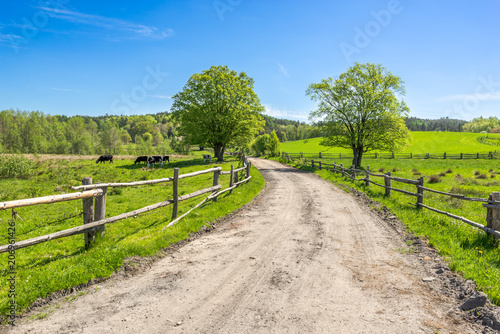 Poster Campagne Rural landscape, grass field under blue sky in countryside scenery with country road