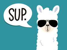 "Llama Poster With Inscription ""sup"" Means.""what's Up"". Simple Alpaca Head With Sunglasses On Blue Background. Vector Illustration With Llama For Poster, Case, Textile, Invitation Etc."