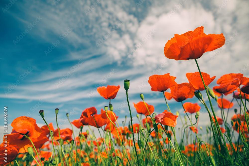 Poppy flowers retro vintage summer background