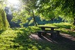 Sun rays shining through the tree branches in the park with a bench and the table