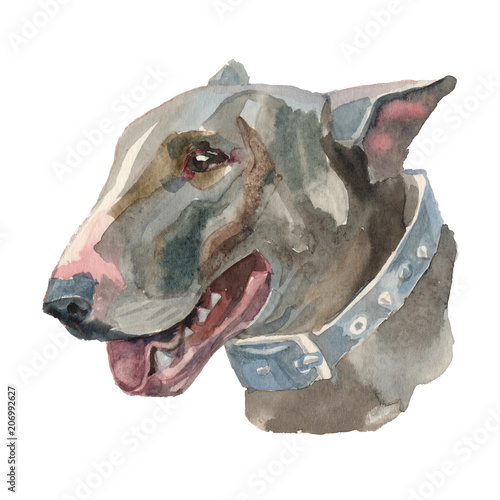The english bull terrier watercolor hand painted dog portreit Fototapete