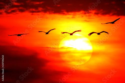 Acrylic Prints Common Cranes. Grus grus.