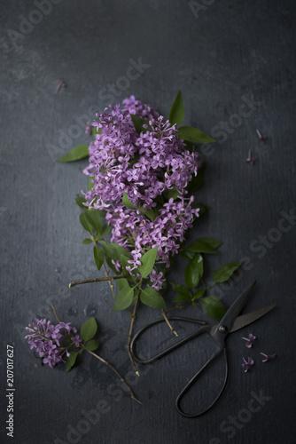 Foto op Canvas Bloemen Lilac