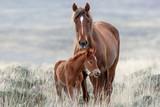 Fototapeta Fototapety z końmi - Wild Horses