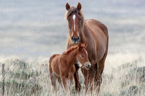 Tuinposter Paarden Wild Horses