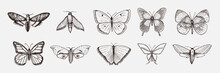 Collection Of Butterfly Or Wil...