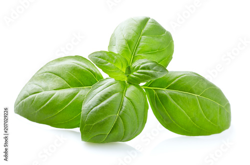 Foto Basil leaves in closeup