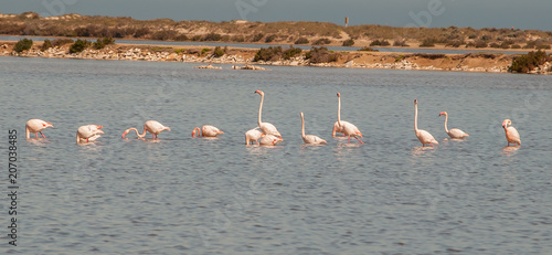 Fotografía Flamingos in the Mar Menor in Murcia. Spain