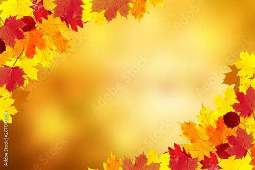 Sunny colorful fall season leaves decoration on blurry bokeh copy space background Canvas Print