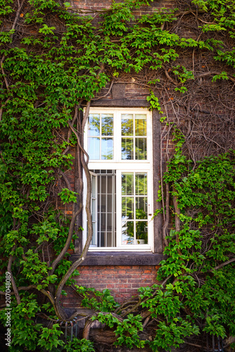 Canvas Print Window of a house overgrown with ivy