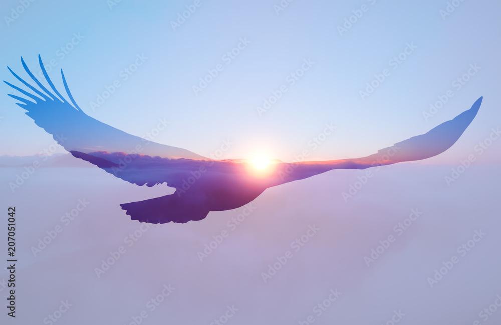 Bald eagle on sunset sky background.