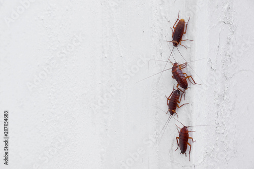 Cockroaches on the white wall of the house