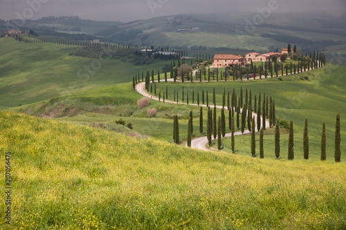 Foto op Plexiglas Pistache beautiful summer landscape with cypress trees and rolling hills