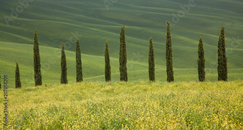 Foto op Canvas Pistache beautiful summer landscape with cypress trees and rolling hills