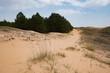 landscape in oleshky sands, desert in Ukraine