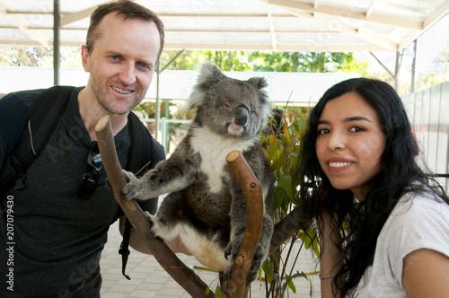 Garden Poster Koala Tourists with Koala - Australia