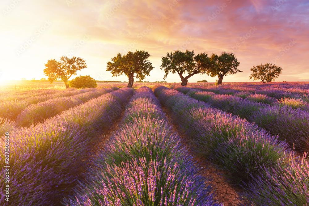 Fototapety, obrazy: Lawendowe pole w Prowansji podczas zachodu słońca
