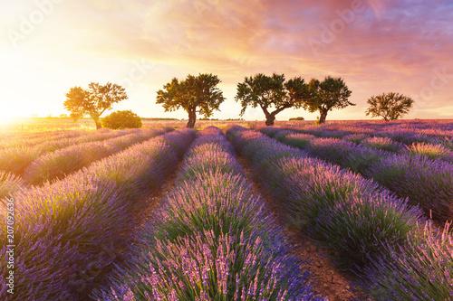 Obraz Lawendowe pole w Prowansji podczas zachodu słońca - fototapety do salonu
