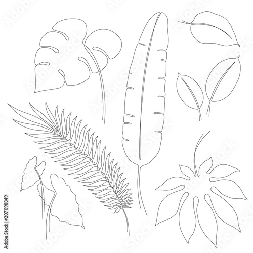 Continuous Line Drawings Of Various Tropical Leaves Single Line Vector Leaves Of Monstera Aralia Ficus Aglaonema Caladium Banana And Palm Contour Line Art Design Elements Or Illustrations Buy This Stock Vector Set of 2 tropical leaf plant design. continuous line drawings of various