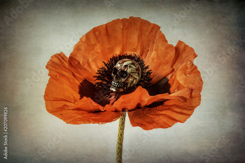 Deurstickers Klaprozen Poppy with skull on textured background, orange