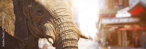 Obraz na plátně  Composite image of close-up of elephant showing its tusk