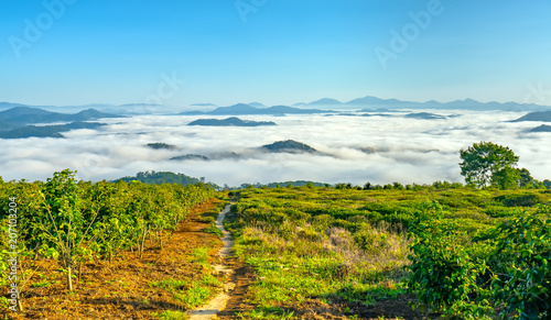 Tuinposter Blauw Landscape under morning fog covered the valley like clouds floating in wonderful idyllic highlands of Dalat, Vietnam