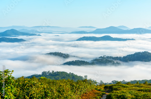 Papiers peints Piscine Landscape under morning fog covered the valley like clouds floating in wonderful idyllic highlands of Dalat, Vietnam