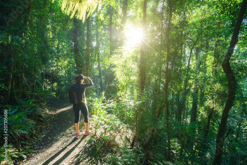 Woman hiking in Rainforest of Dorrigo National Park, New South Wales, Australia