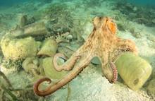 Plastic Pollution In Ocean. Octopus On Plastic Bottles And Trash On Sea Floor