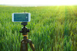 Modern smartphone fixed on fluid tripod are ready to record video in the wheat field. Summer outdoor