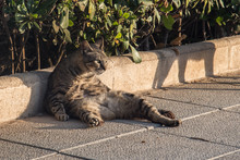 A Lazy City Cat Is Lying On The Street, Taking Siesta And Does Not Hurry Anywhere. Close Up View.2