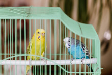 The Green And Blue Parrots Are...