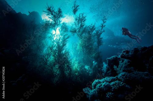 Valokuva  Menjangan island, Indonesia.