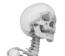 Human Skull Skeleton, Isolated...