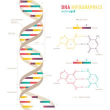 DNA Infographics