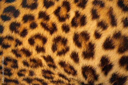 Deurstickers Panter Tiger skin.
