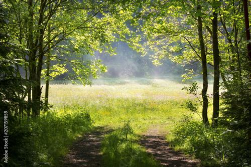Nebel über einer Waldwiese