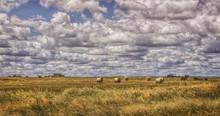 Hay Bales In A Field, Western ...