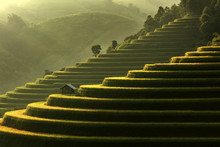 Scenic View Of Terraced Rice Field