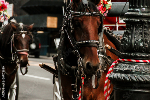 Fototapeta horse carriages central park in New York City