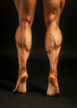 Detail On Male Bodybuilder Cal...