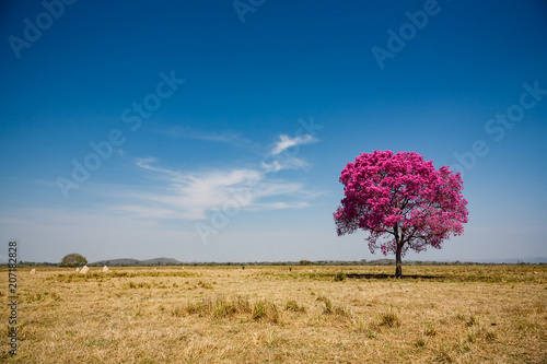 Secluded tree with pink leaves and blue sky - 207182828