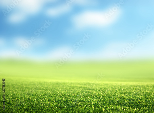 Foto auf Gartenposter Landschappen field of spring grass (shallow DOF)
