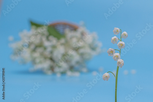 In de dag Lelietje van dalen lily of the valley on blue background