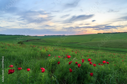 Foto op Aluminium Platteland A field of red flowers and grass on a beautiful sunset.