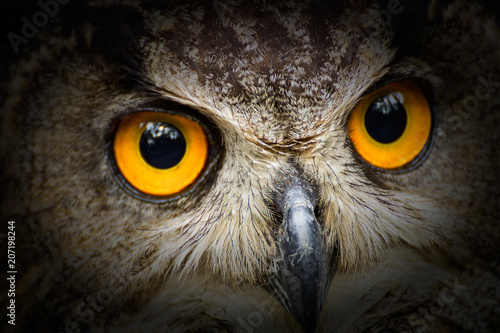Portrait owl with big yellow eyes with black vintage