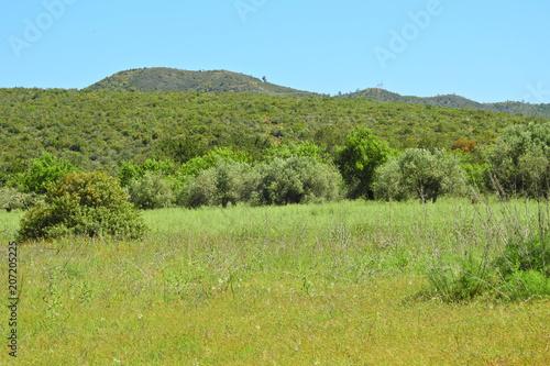 Foto op Canvas Pistache Rural Landscape in Algarve, Portugal